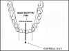 Figure 26 - Mandibular Central/Lateral Incisors